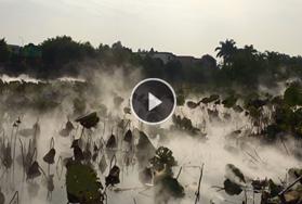 广州南沙东涌绿道湿地公园景观造雾