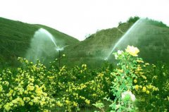 花草喷灌园林喷淋