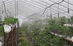 草莓园园林喷灌