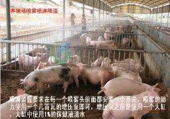 如何在猪场中的正确使用喷雾降温设备措施?