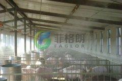 夏天前的准备喷雾降温在猪场中的实践应用