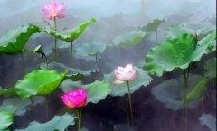 人造雾景为山河更美―过雨荷花满院香