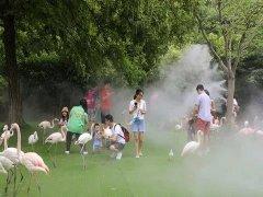 """人工造雾在上海野生动物园里存在这样的""""仙境"""